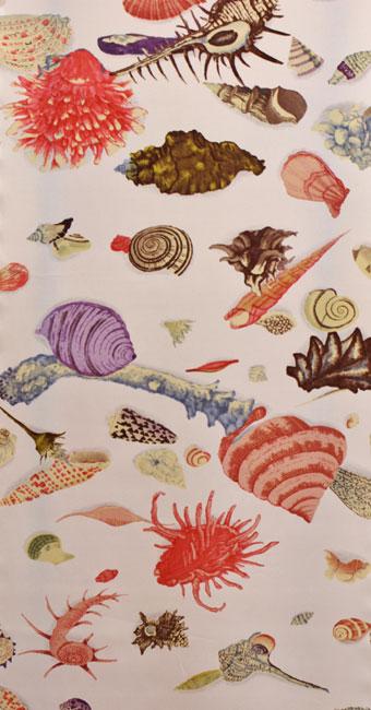 貝殻:ピンク