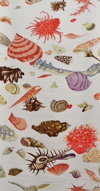 貝殻:グレー