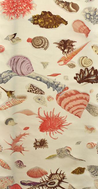 貝殻:クリーム